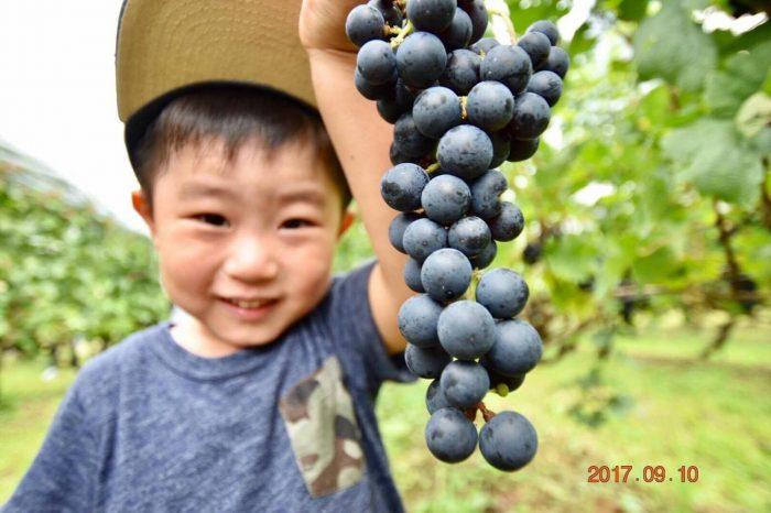 新潟もワイン大国なんですよ~。アグリコア越後ワイン