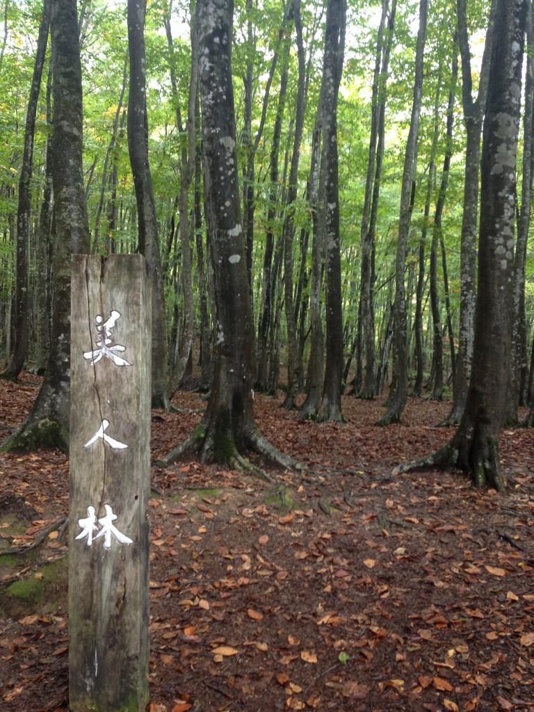 美人な林を知っていますか?